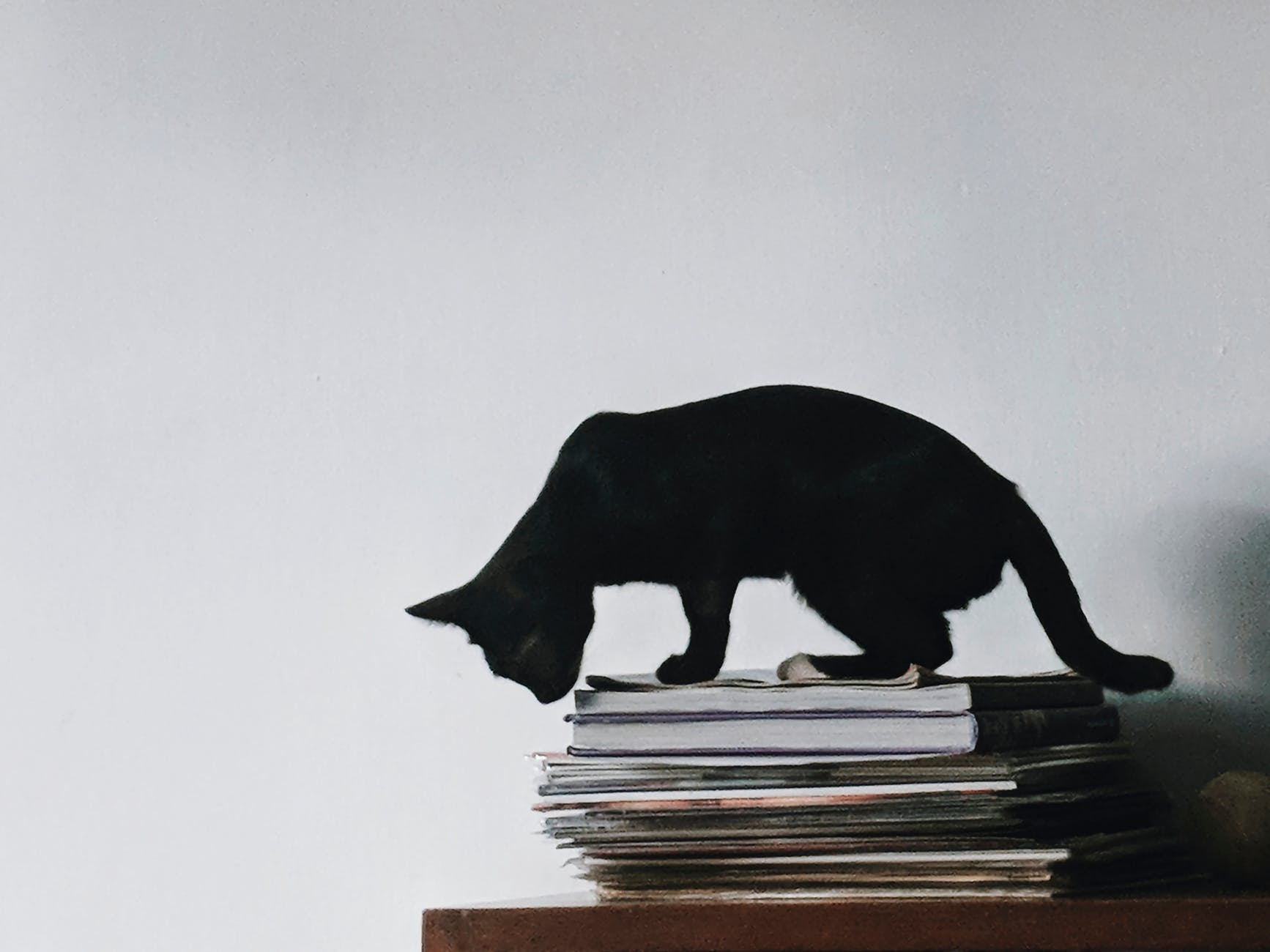 black cat on top of the magazines