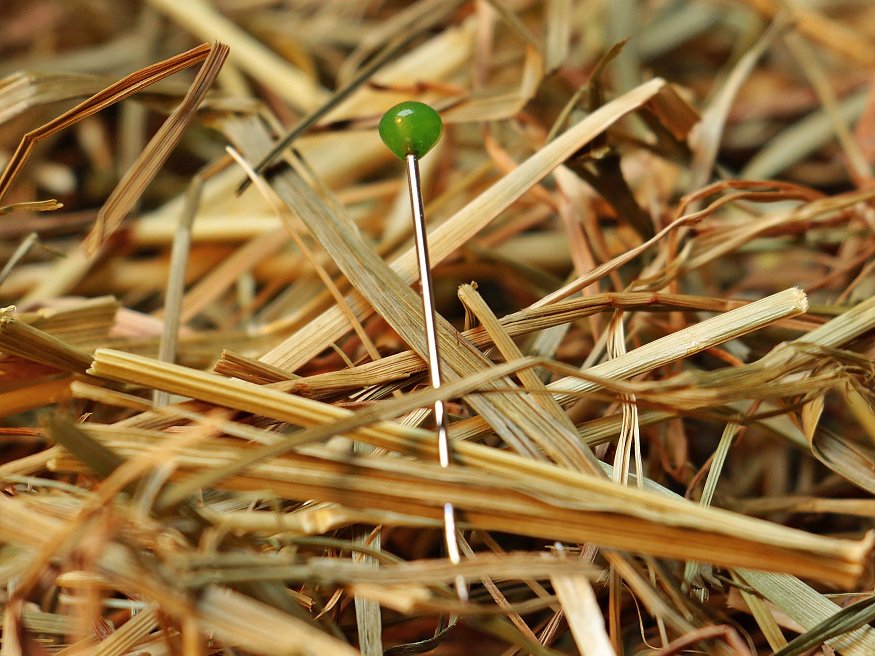 green pin on brown hay