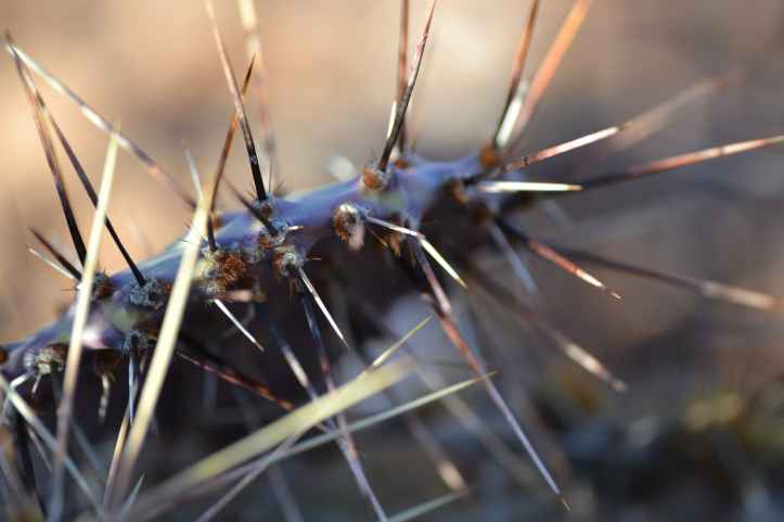 macro photography of spiky plant