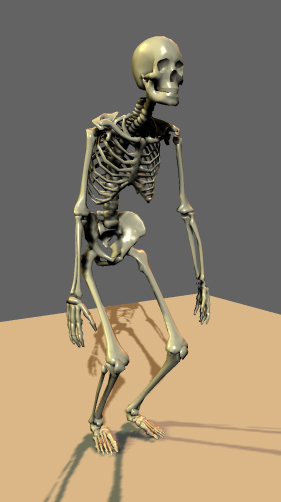 Squelette PSR de trois quart face copier