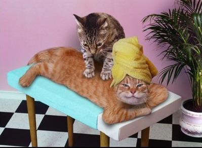 massages de chats