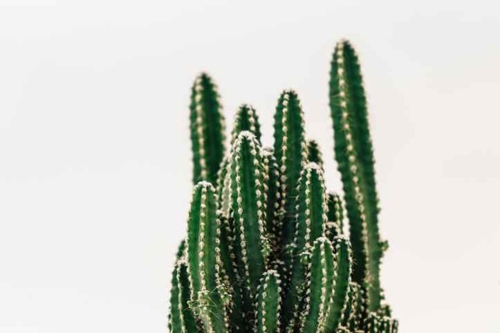 acere aiguise arriere plan blanc cactus