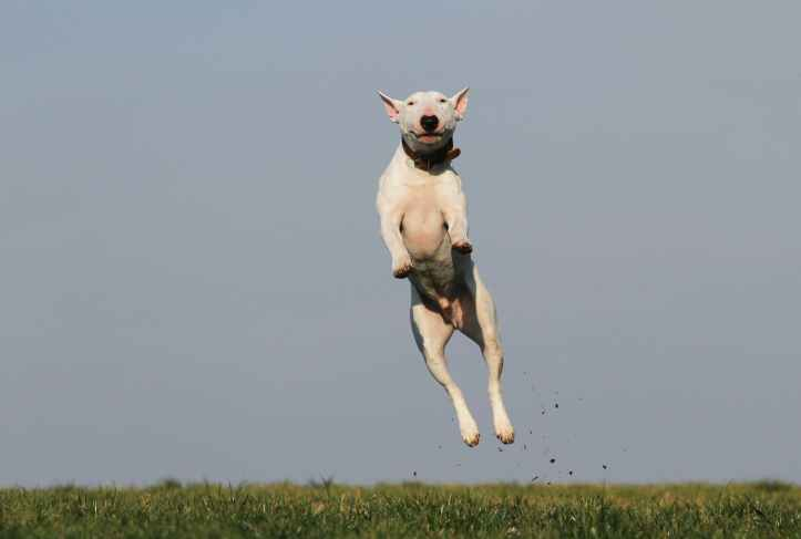 animal animal de compagnie canin chien