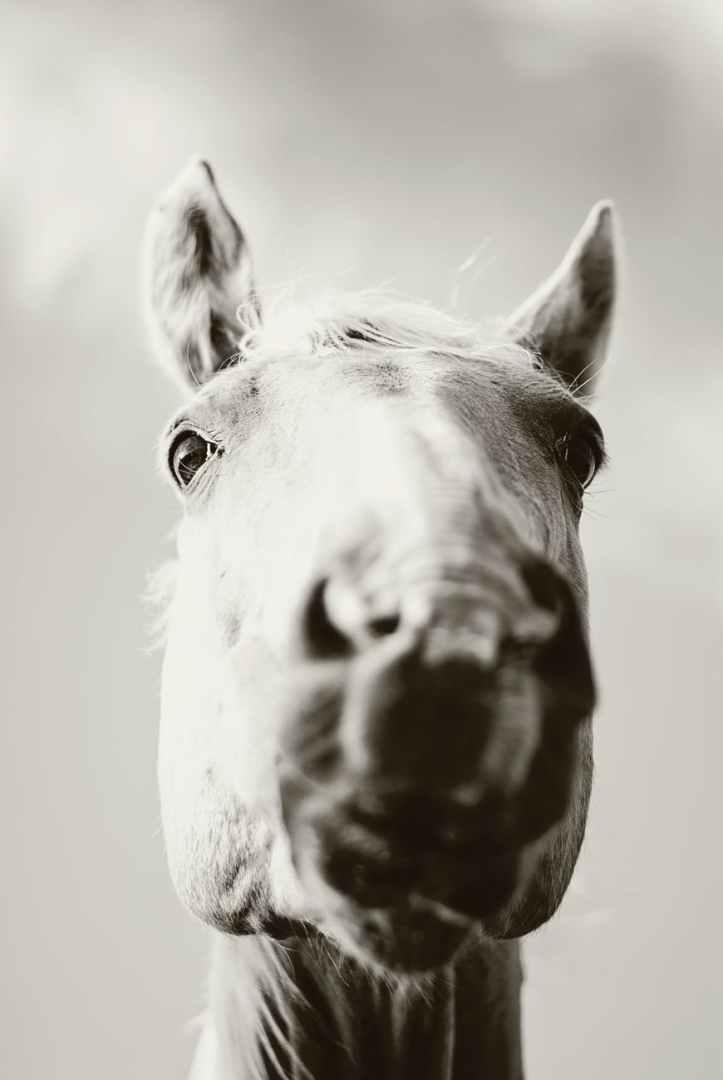 adorable animal animal de compagnie cavalerie