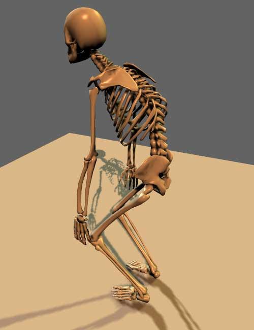 Squelette-PSR-de-profil-dos